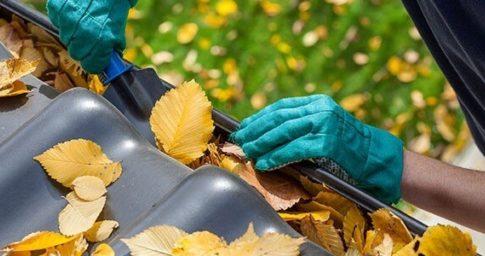 Garden maintenance 1